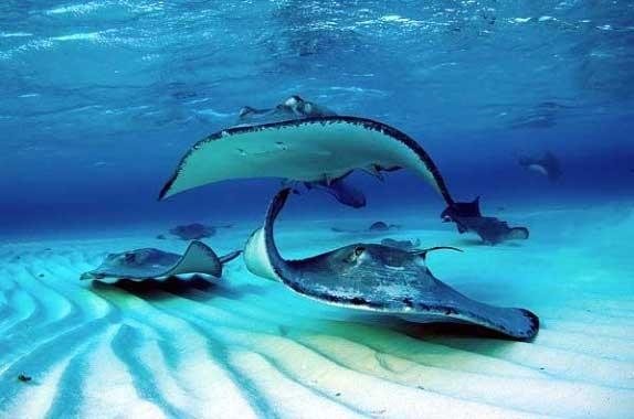 Explore the Caribbean Sea in Scuba Diving Paradise - The Cayman Islands