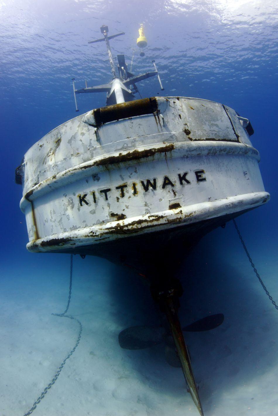 Kittiwake - stern
